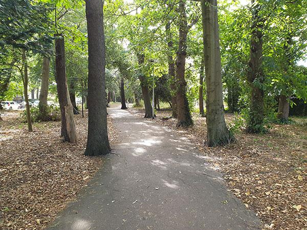 trees alongside winding path